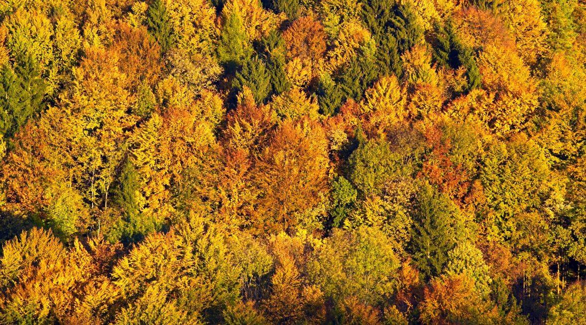 Herbst-im-Ahorntal